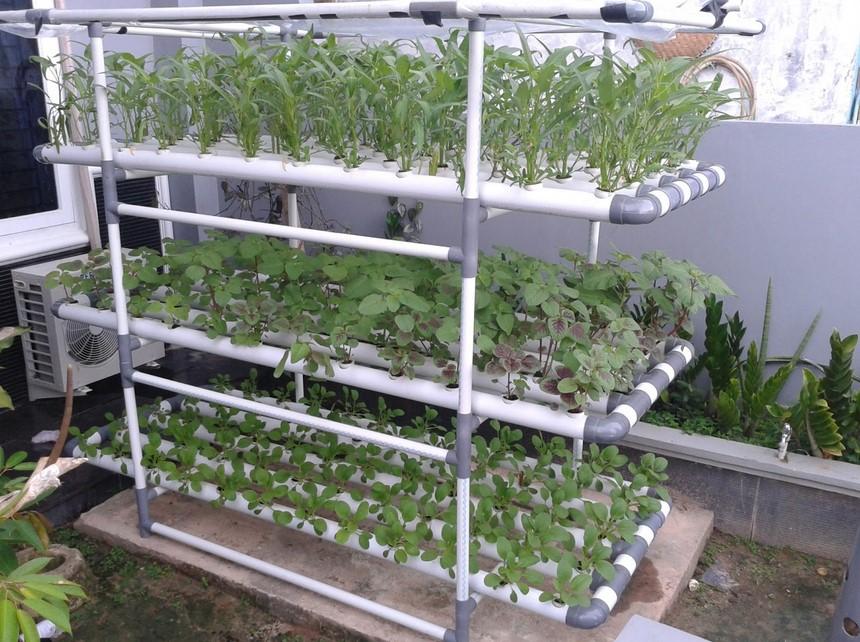 Bertanam Vertikultur dengan Pipa Paralon