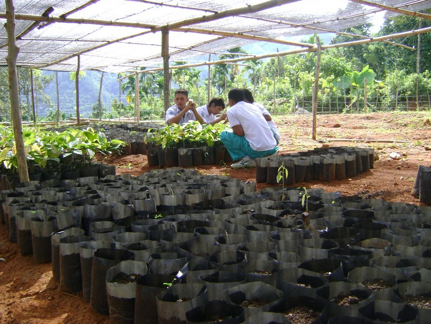 Melakukan penanaman biji kakao