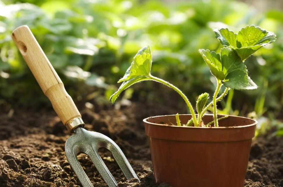 Pengaruh Tingkat Keasaman Tanah