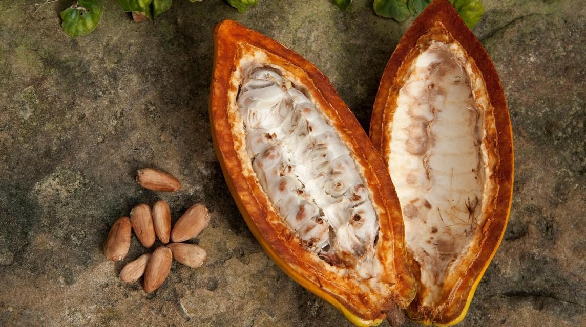Perhatikan pemilihan biji kakao