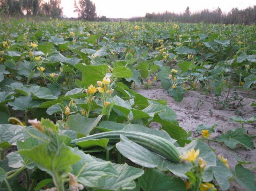 Pertanian Subur dengan pH Tanah Normal