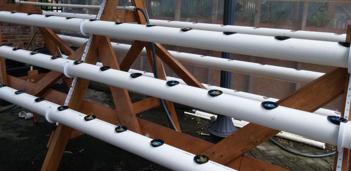 Membuat Hidroponik Paralon