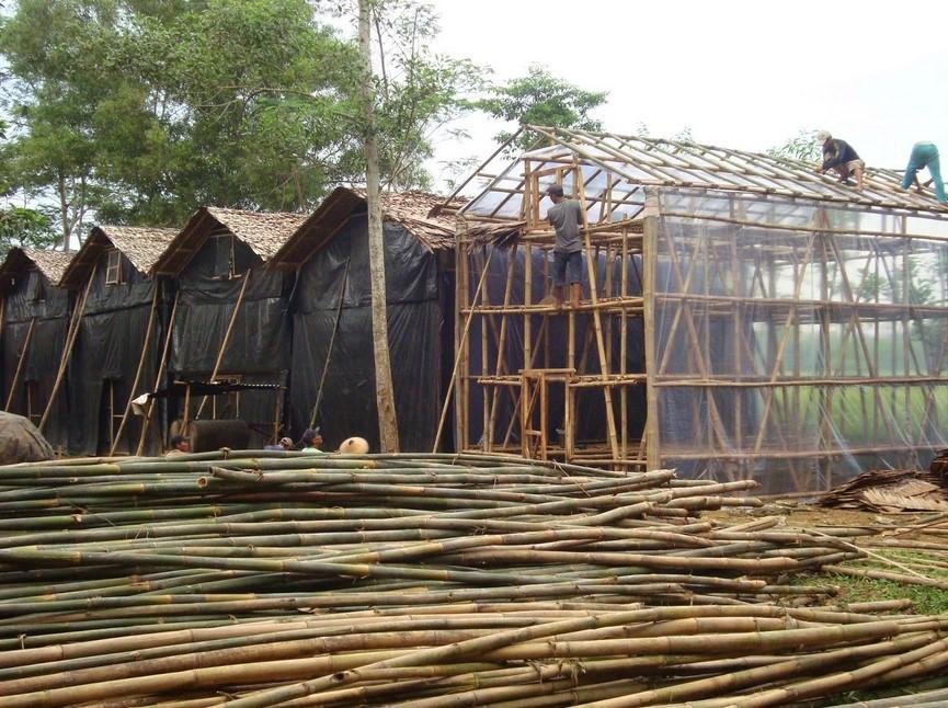 Membuat Rumah Jamur Tiram