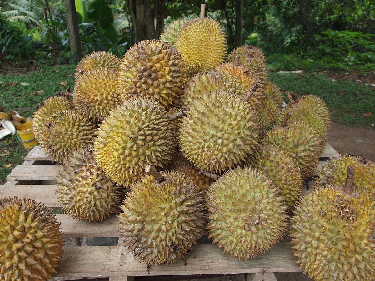 Cara Stek Buah Durian