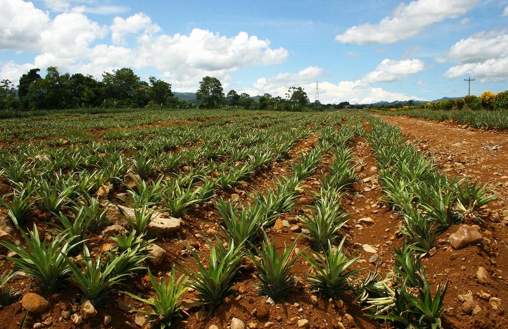 Media Tanah Untuk Bertanam