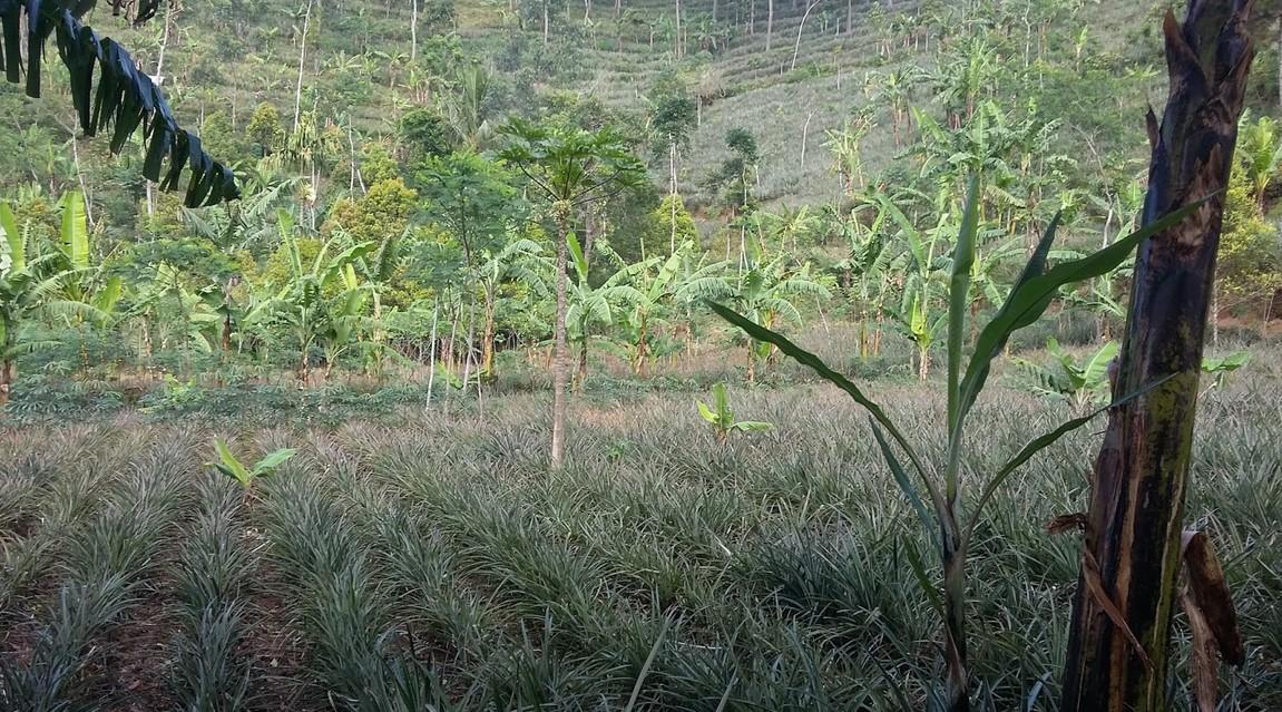 Menentukan Lokasi Bertanam
