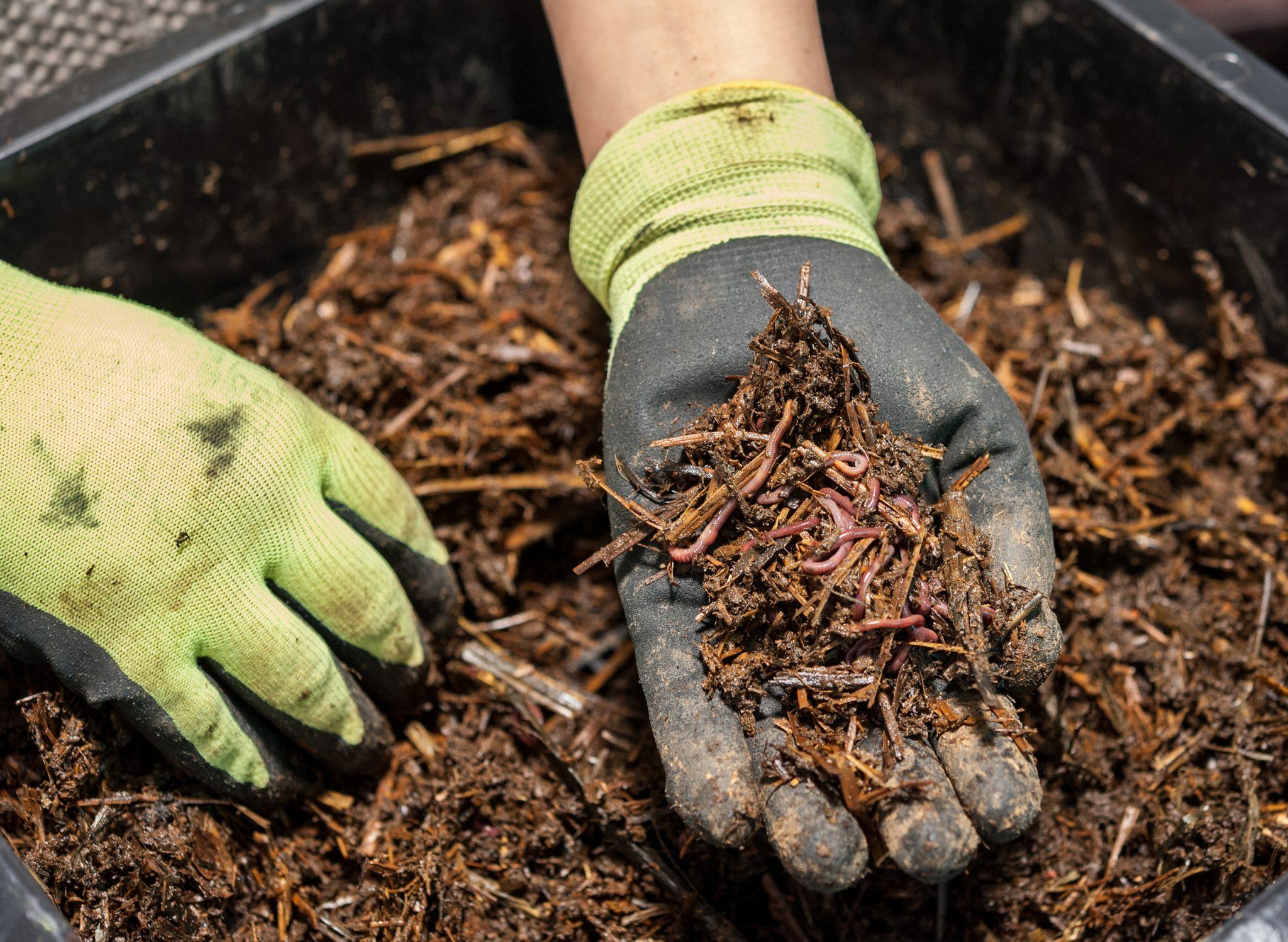 Proses Pembuatan Kompos Teh