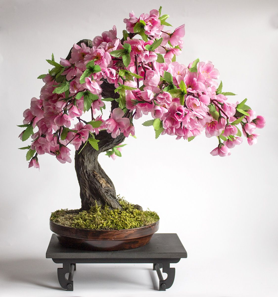 Bonsai Sakura
