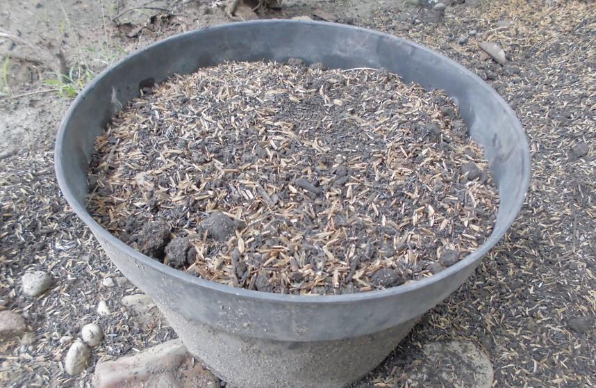 Isi pot dengan tanah humus