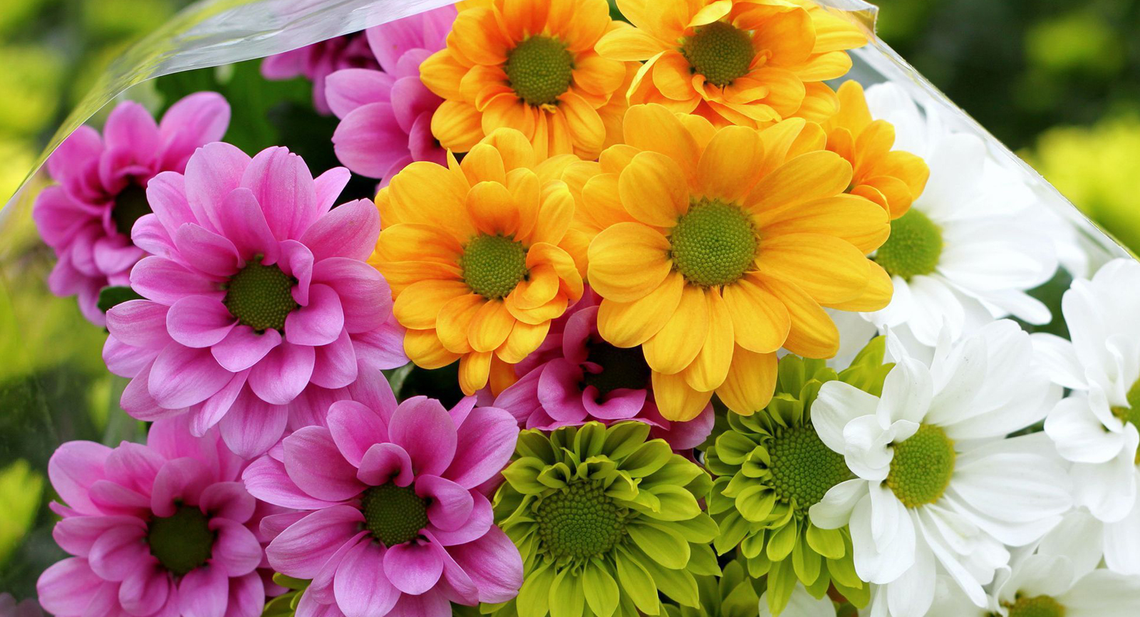 Memilih Jenis Bunga
