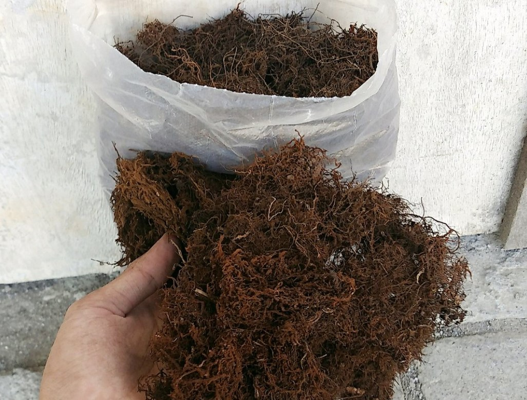 Moss kadaka