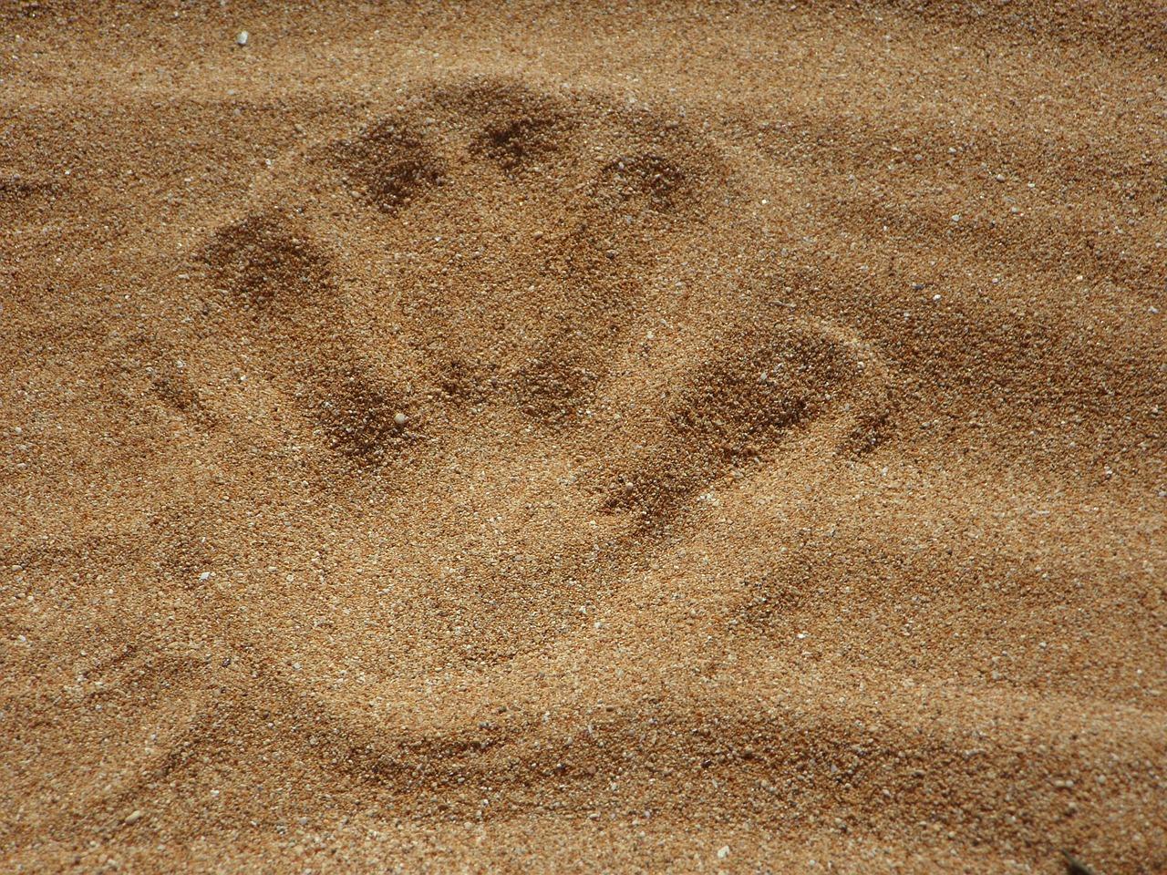 Pasir