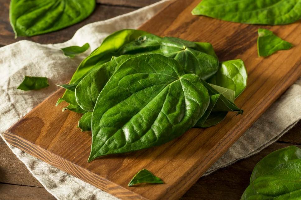 manfaat menanam daun sirih