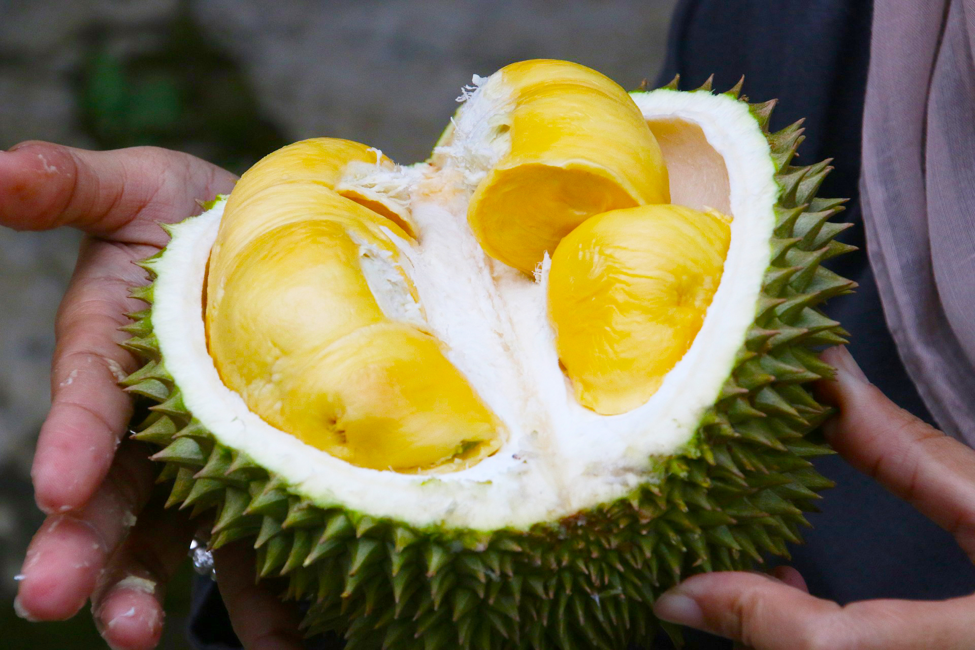 Bentuk Buah Durian