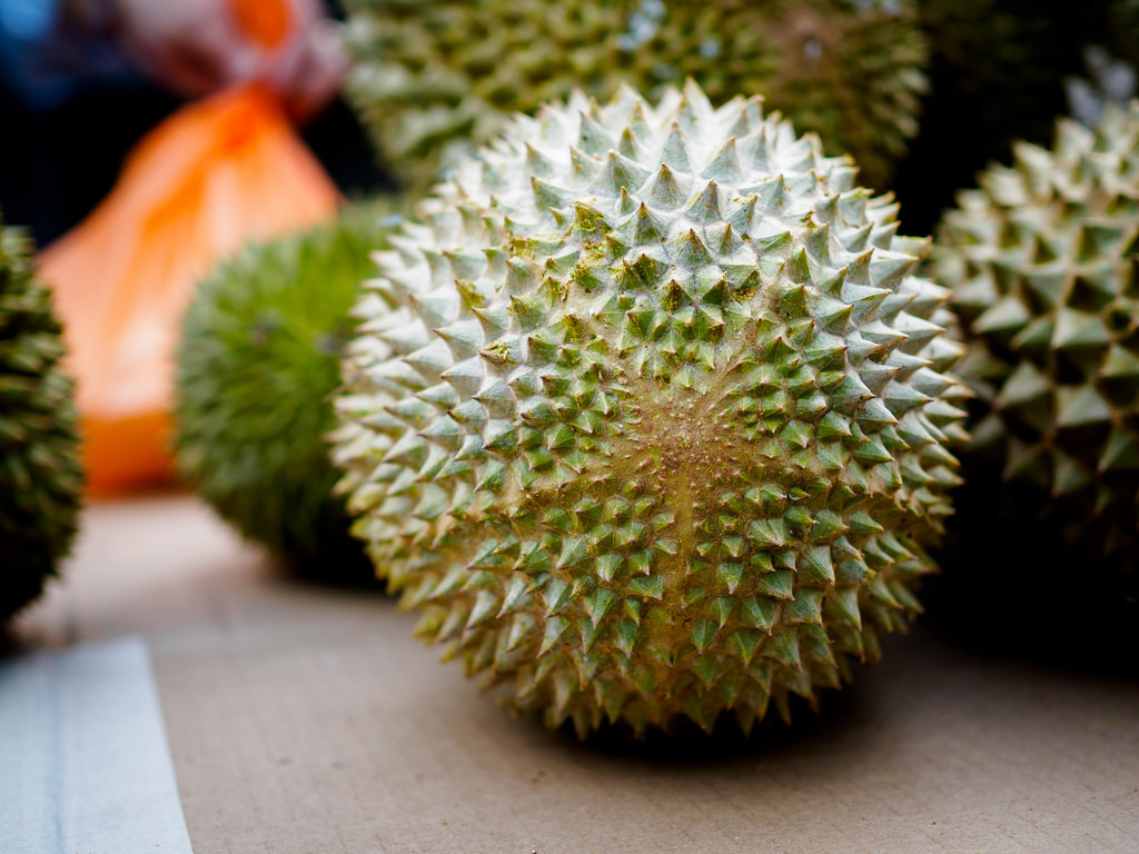 Cara Okulasi Durian
