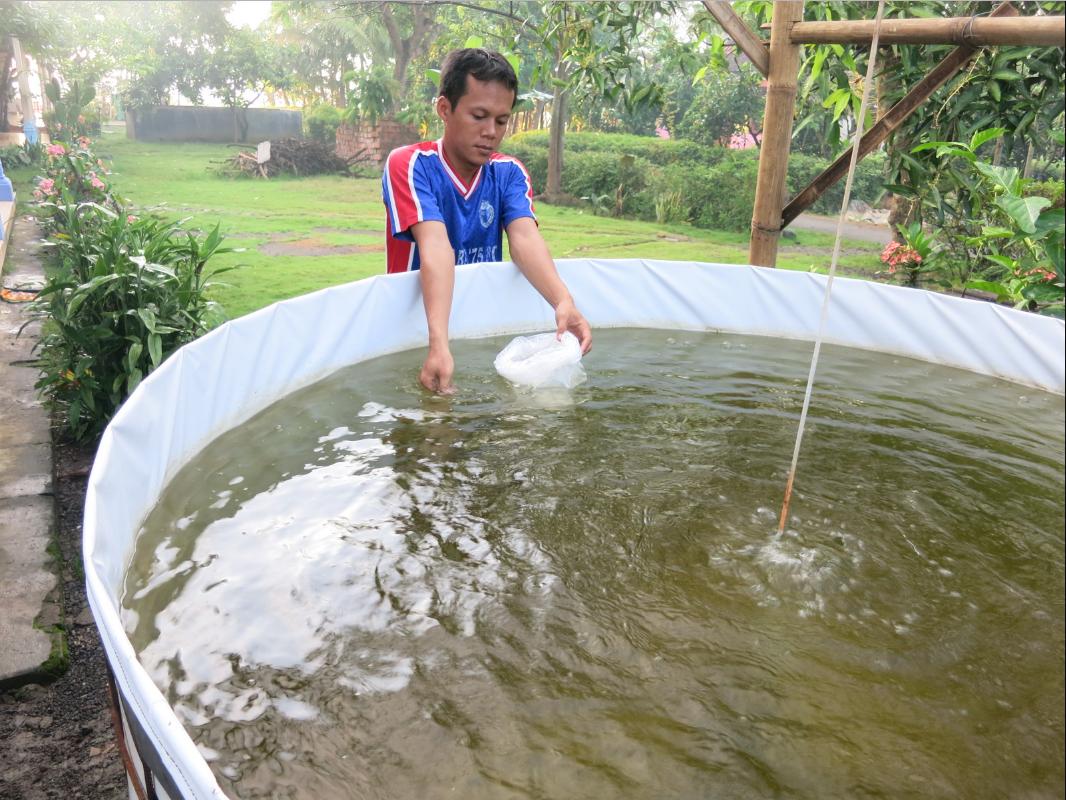 kolam udang vename