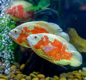 Download 4400 Gambar Ikan Bagus HD Terbaik
