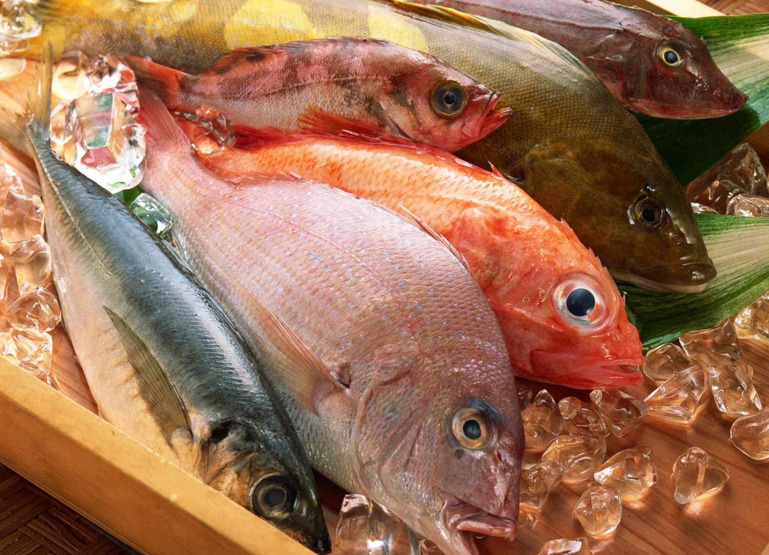 Jenis Ikan Laut Konsumsi