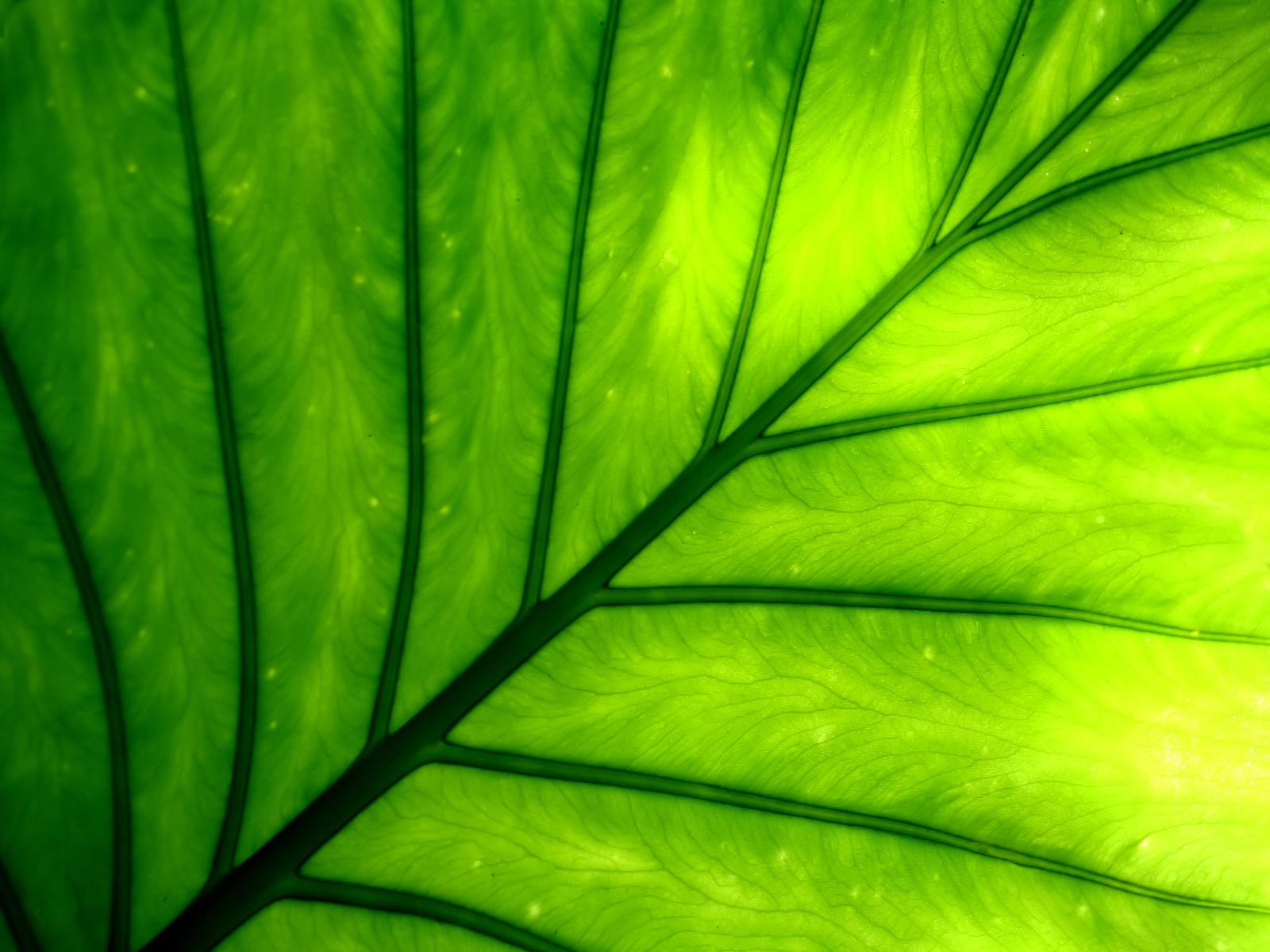 Mempercepat Produksi Klorofil