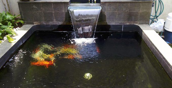 Perawatan Filter Kolam Ikan