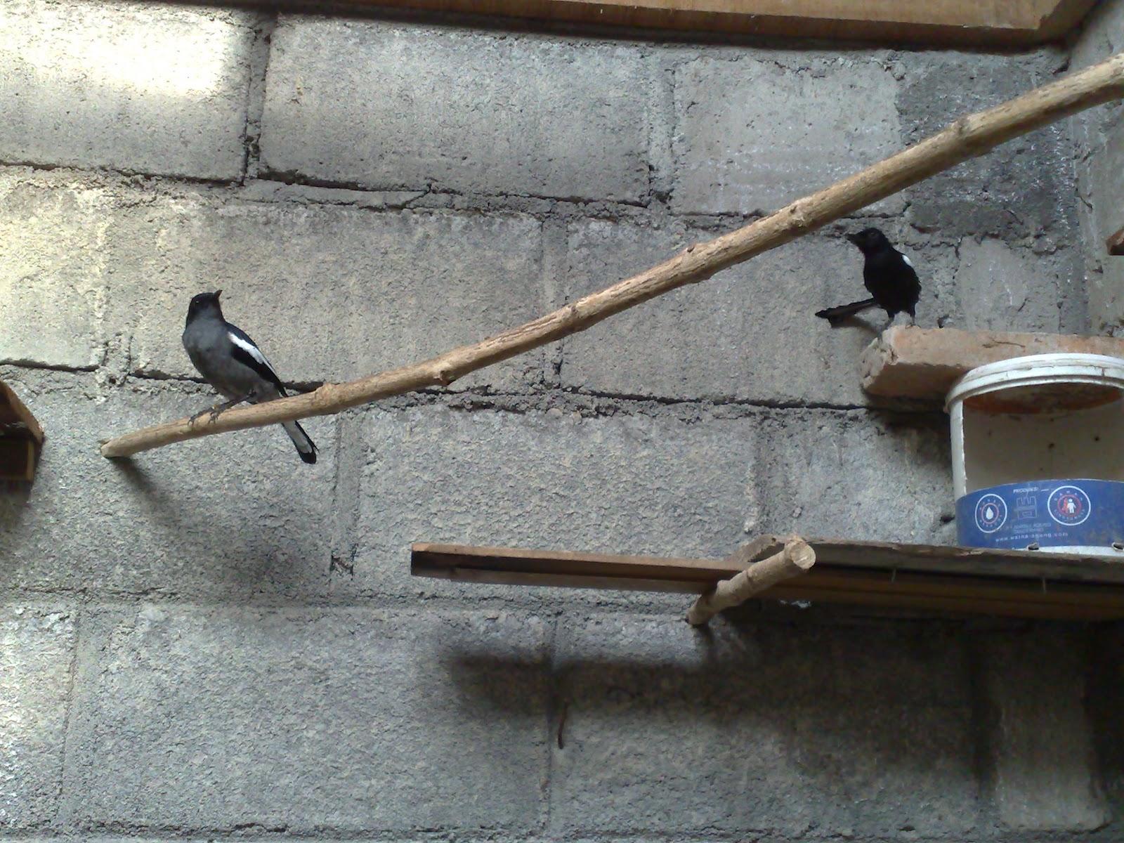 Satukan Burung dalam Satu Sangkar
