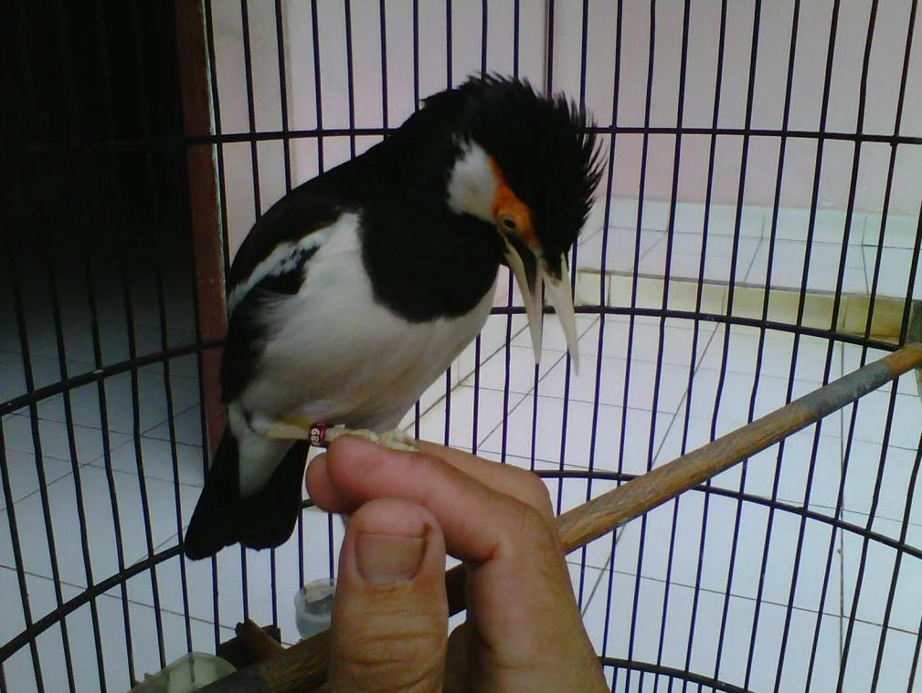 Adaptasi Burung
