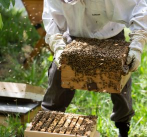 Kandang Budiaya Lebah Madu