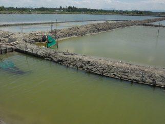 Mengecek Kualitas Air Kolam