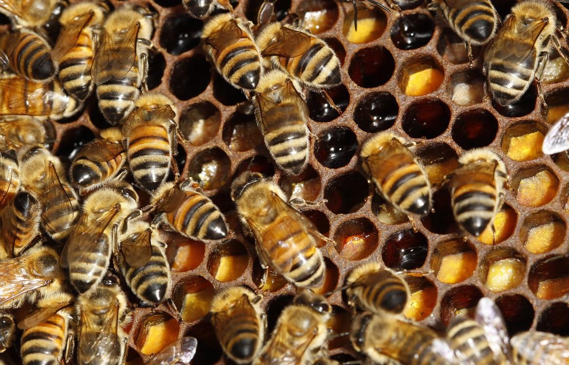 Pemeliharaan Lebah