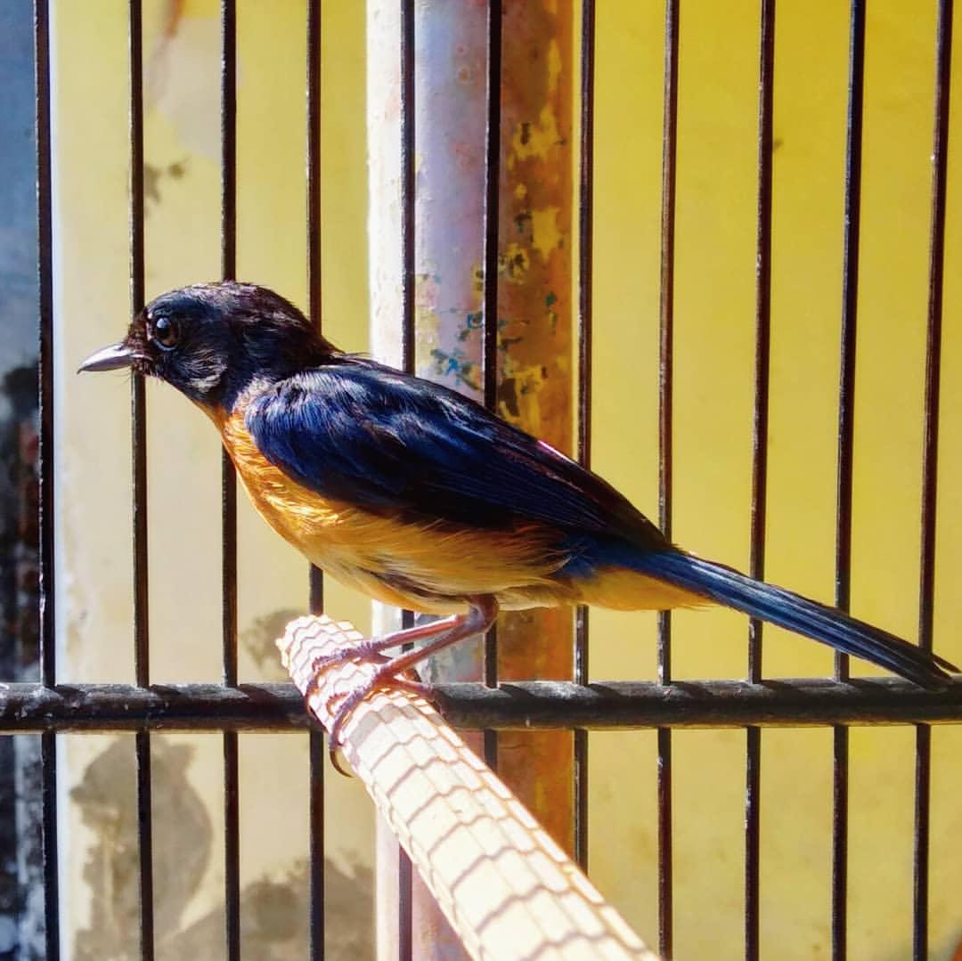Memandikan Burung