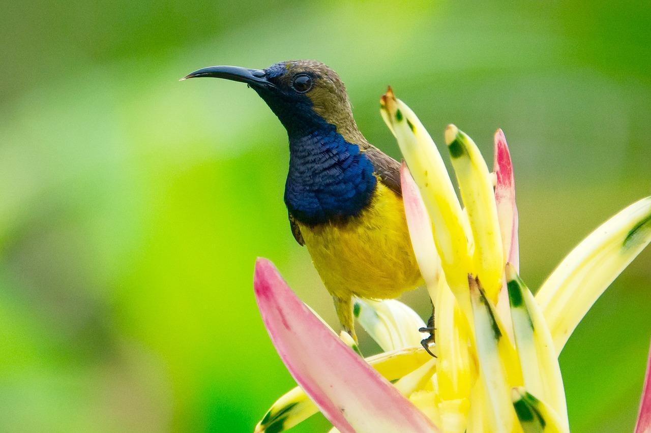 Mengatasi suara Kolibri Tidak Keluar
