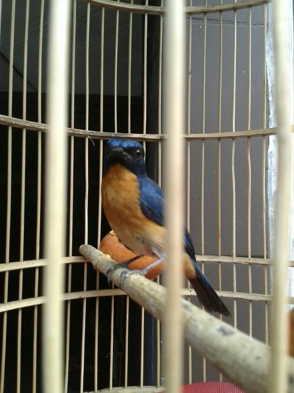 Menjemur Burung
